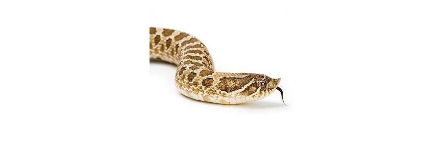 Crème de Venin de Serpent 50 g