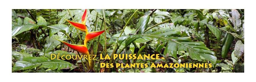 Plantes d'Amazonie